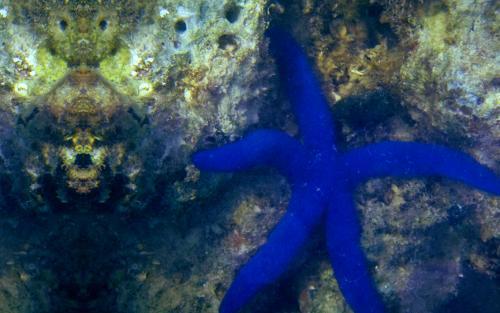 3. Starfish 400 x 250 bathroom 6