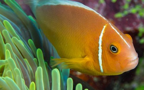 4. orange fish